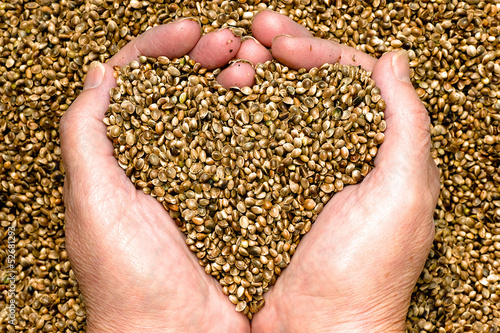 Hemp seeds held by woman hands shaping a heart on a hemp seed background - 52681293