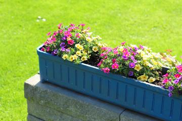 bunter Blumenkasten im Garten