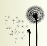 Blow Dandelion vector background - 52684031