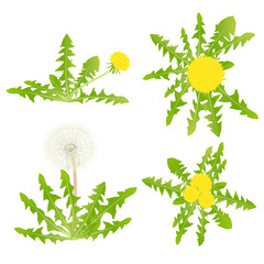 Blow Dandelion vector background