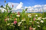 Fototapety Einladung zum Entspannen: Bunte Sommerblumen-Wiese