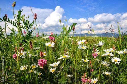 Sticker Einladung zum Entspannen: Bunte Sommerblumen-Wiese
