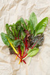 Rainbow Chard leaves(Beta vulgaris cicla)