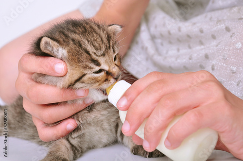 child feeding small kitten from the bottle