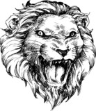 lion head hand drawn - 52696432