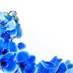 fondo con orquídeas azules