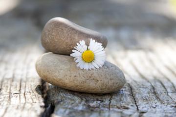 margarita y piedras