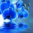 orquídea azul y reflejo en el agua