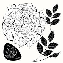 White and black roses.