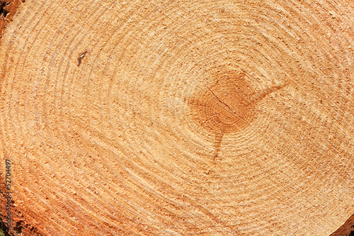 freshly cut fir tree rings