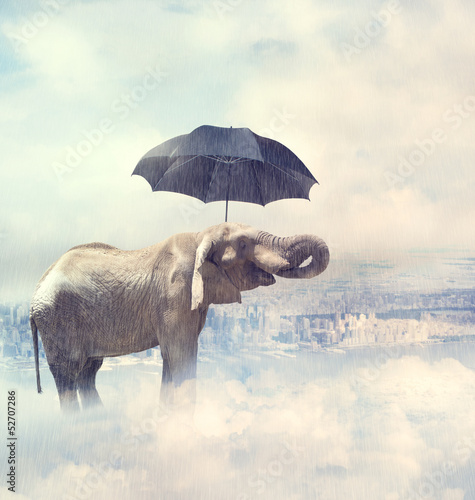 Fotobehang Olifant Elephant enjoying rain avobe the city on the clouds