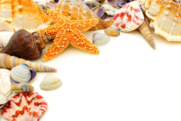 Colorful seashell corner border on a white background