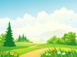Forest landscape
