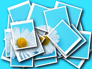 collage,Bellis perennis,daisy in front of colorful background