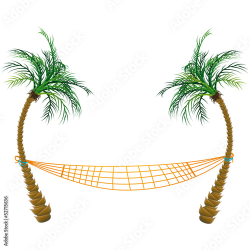 Palm trees and Hamac
