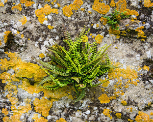 Fern on a wall