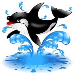 Happy Jumping Killer Whale Cartoon-Orca Salta in Acqua-Vector