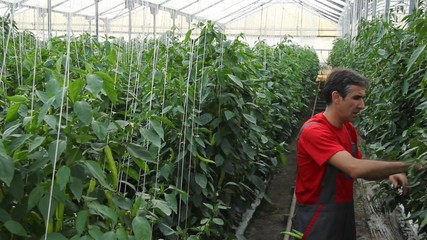 Farmer and Pepper Plants