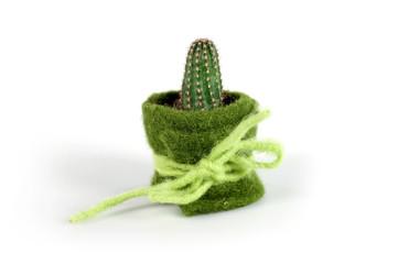 cactus con coperta