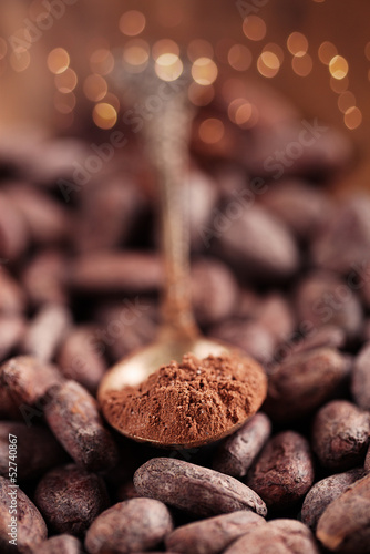 cocoa powder with sugar in spoon  on roasted cocoa chocolate bea