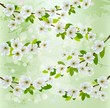 Nature background with blossoming tree branches. Vector illustra