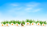 Fototapety Nature background with grass and flowers