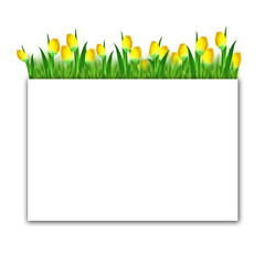 Frame: tulips in the grass