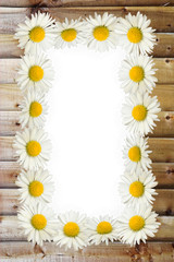 Frame: daisies on the wooden background