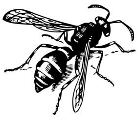 Wasp Odynerus