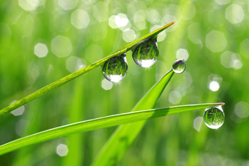 Dew drops close up
