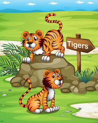 Two tigers near the wooden arrowboard