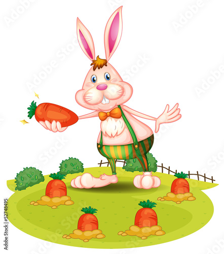 A rabbit at the farm with carrots