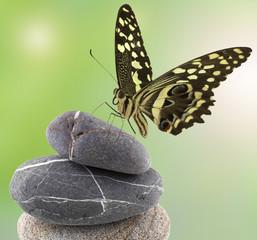 papillon sur galets