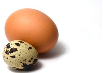 Huevo de gallina y codorniz
