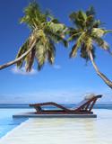 Fototapety piscine tropicale sous les cocotiers