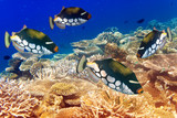 Fotoroleta pack of tropical fishes over a coral reef