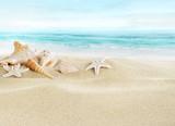 Fototapety Shells on sandy beach