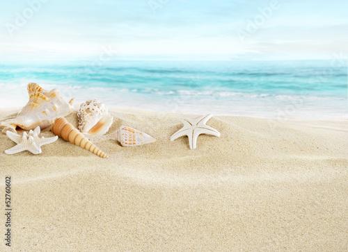 krajobraz-muszle-na-piaszczystej