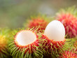 asian  fruit rambutan