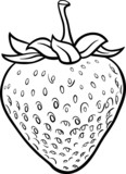 Fototapety strawberry illustration for coloring book