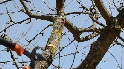 fruit tree cut trim two handle clippers spring garden