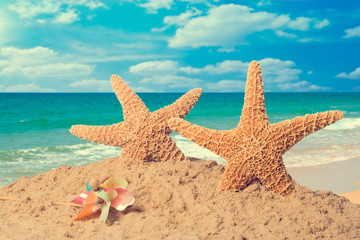Starfish On Beach