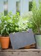 Fresh herbs, slate
