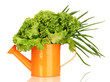 Useful herbs in orange watering can isolated on white