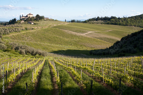 Chianti vineyard slopes