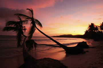 Silhouette of palm trees at sunrise, Las Galeras beach