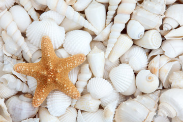 Seashell Beauty