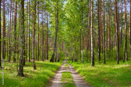 The way by the forest. Beautiful wallpaper.