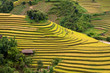 Gold terraced rice fields with houses on stilts in Mu Cang Chai,