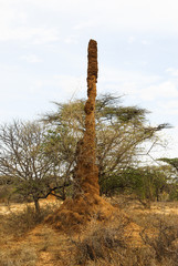 Giant termite mound in Ethiopia